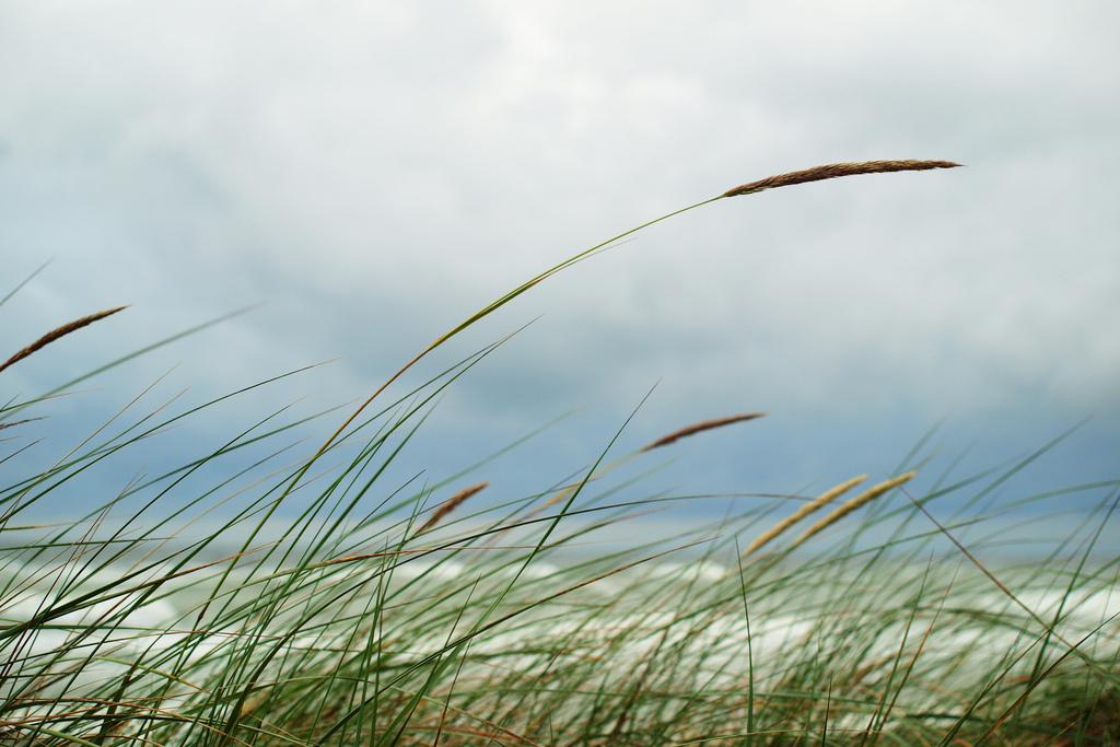 משיב הרוח ומוריד הטל, תמונה איואן מלכין, הים הבלטי