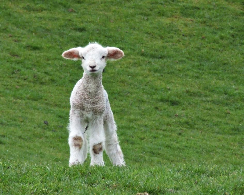 ה' רועי לא אחסר, תמונה EssjayNZ