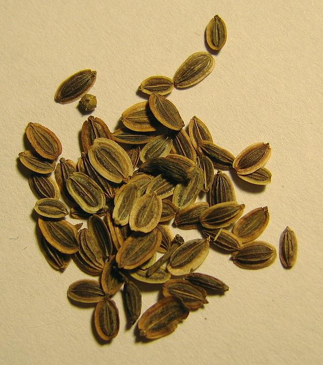 זרע השמיר
