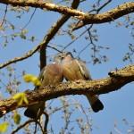 זהר פרשת מצורע, מאמר שתי ציפורים חיות